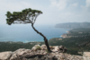 tree monolithos greece