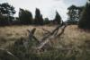 rotten trees heath
