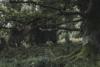 the forest of lüneburg heath