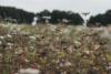 flower fields in the heath