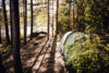 tent and camp in the woods
