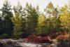 dalsland torrskogsleden